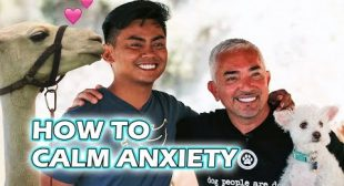 Calming Anxiety with Guava Juice and Lorenzo Llama