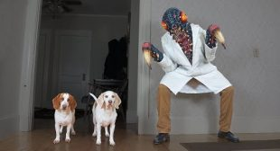 Dogs Attacked by Giant Bug! Funny Dogs Maymo, Penny, & Potpie