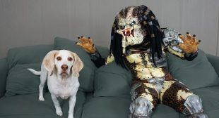 Dogs vs Predator Prank! Funny Dogs Maymo, Penny, & Potpie