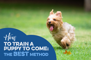How to Train a Puppy to Come, the Best Method!
