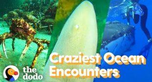 Top 5 Craziest Ocean Encounters | The Dodo