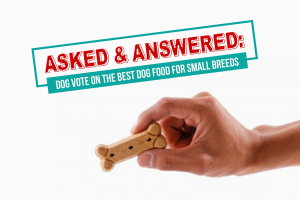 Asked & Answered: Dogs Vote on the Best Dog Food For Small Breeds