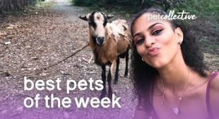 Best Pets of the Week (August 2019) Week 3 | The Pet Collective