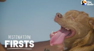 Blind Rescue Dog Feels Sand for the First Time   The Dodo Destination: Firsts