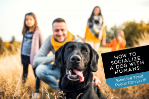 How to Socialize a Dog with Humans: Even the Timid Pooch Can Do It!