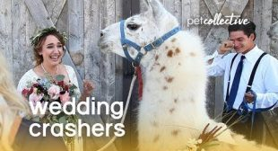 (Pet) Wedding Crashers   The Pet Collective