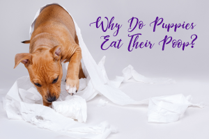 Why Do Puppies Eat Their Poop