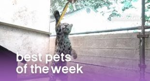 Best Pets of the Week (September 2019) Week 2 | The Pet Collective