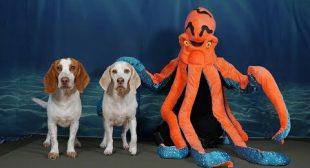 Dogs Pranked by Octopus & Shark: Funny Dog Prank Maymo & Potpie