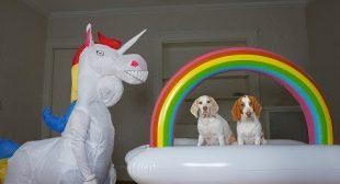 Dogs vs Unicorn Prank & Rainbow Surprise: Funny Dogs Maymo, Potpie, & Penny