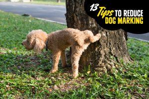 13 Tips to Reduce Dog Marking