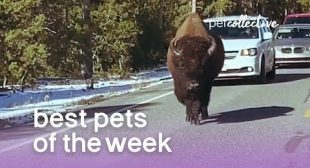 Best Pets of the Week – BUFF DUDE | The Pet Collective