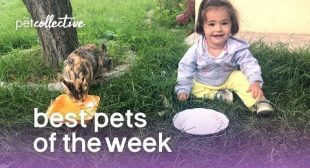 Best Pets of the Week – COPY CATS | The Pet Collective