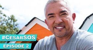 Cesar Millan's Tips On An Overly Aggressive Dog #CesarSOS