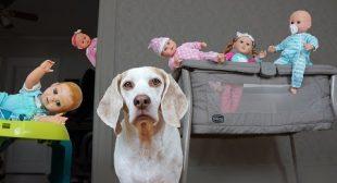 Dog vs Funny Babies Daycare Disaster! Funny Dog Maymo