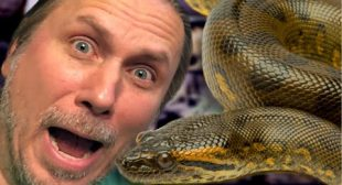 FEAR OF SNAKES!!! HOW TO OVERCOME IT!! | BRIAN BARCZYK