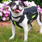 Walkin' vertebraVe: Back Support for EVERY Dog