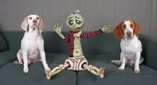 Zombie Boy & Cute Dogs Play: Funny Dogs Maymo & Potpie