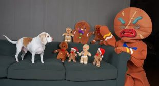 Dog vs Gingerbread Man Army Prank: Funny Dogs Maymo & Potpie Christmas Pranks