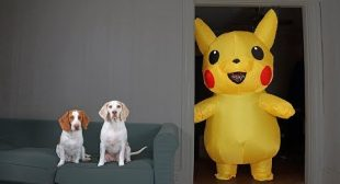 Dogs vs Pokemon Prank: Giant Pikachu Pranks Funny Dogs Maymo & Potpie