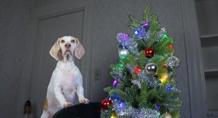 How to Decorate Christmas Tree by DOG: Funny Dog Maymo