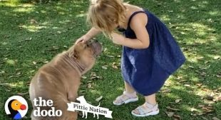 Sick Shelter Pit Bull Captures 2-Year-Old Girl's Heart | The Dodo Pittie Nation