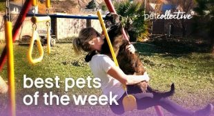 Best Pets of the Week – PLAYGROUND PUP | The Pet Collective