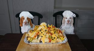 Chef Dog Makes Nachos: Funny Dogs Maymo & Potpie Cooking Nacho Recipe