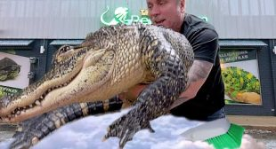 GIVING MY HUGE PET ALLIGATOR A BATH!! | BRIAN BARCZYK