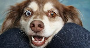 Good Dental Health is Crucial for Dogs and Cats
