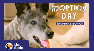 19-Year-Old Shelter Dog Finally Gets Adopted | The Dodo Adoption Day