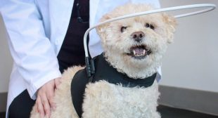 SARDS: Helping A Pet Adjust to Sudden Vision Loss