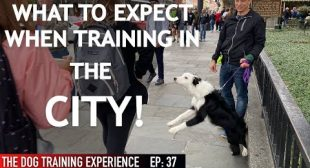 Training My Dog In The City For The FIRST Time!