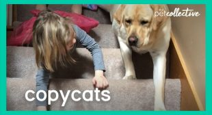 Copycats | The Pet Collective