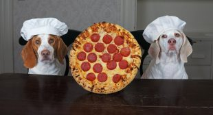 Dogs Make Pizza: Funny Chef Dog Maymo & Potpie Cook Pizza!