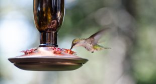 Expert-approved ways to feed all your favorite birds