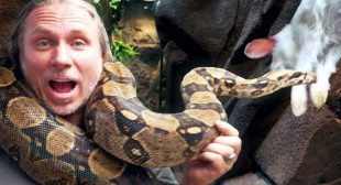 Giant BOA Finally Ate at my Reptile Zoo!! Pond Broke Again…| BRIAN BARCZYK