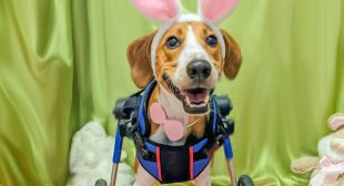 Handicapped Dog Named This Year's Cadbury Bunny