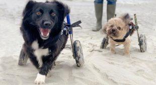 Secure Your Handicapped Pet's Future