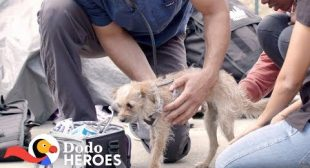 This Vet's A Hero To Homeless People And Their Pets | The Dodo Heroes