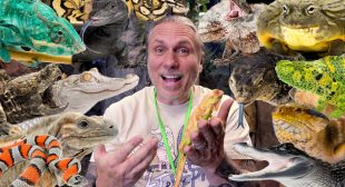 UPDATE ON ALL MY REPTILES!! DEALING WITH THE NEW REALITY!! | BRIAN BARCZYK