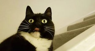 CATS who think they are DOGS! – Proper LAUGHING SESSION for you :)
