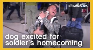 Dog Excited for Soldier's Homecoming
