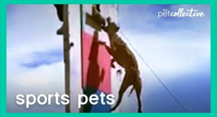 Sport Pets | The Pet Collective