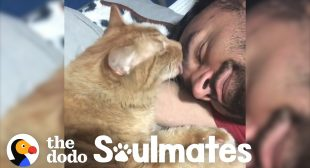 Guy and his super loyal cat have the cutest bedtime routine   The Dodo Soulmates