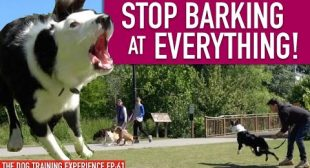 How To Train Your Dog To STOP BARKING at EVERYTHING That MOVES! Continued…