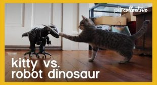 Kitty vs Robot Dinosaur