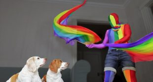 Owner Cheers Up Dogs with Rainbow Dance Party: Pride #WithMe Dance Party & Surprise Ball Pit