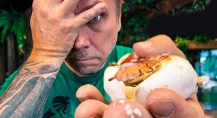 SNAKE EGG CUTTING!! DISAPPOINTING RESULTS!! | BRIAN BARCZYK