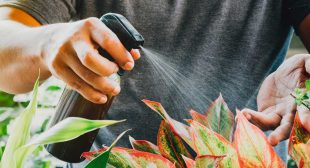 Top Tips for Growing Tropical Plants in a Temperate Climate